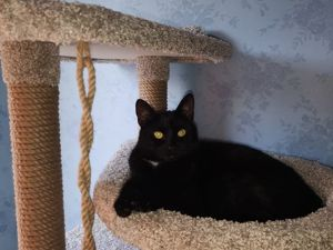 Самые лучшие коты- это черные коты. Ярмарка Мастеров - ручная работа, handmade.