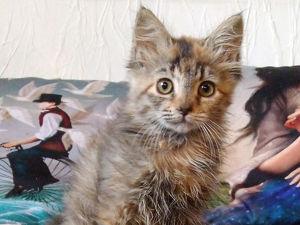 А у нас сегодня кошка родила вчера котят. Ярмарка Мастеров - ручная работа, handmade.