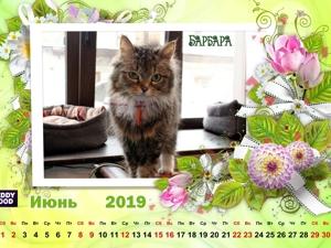 Кошачий календарь Июнь 19г. Ярмарка Мастеров - ручная работа, handmade.