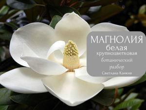 Ботанический разбор цветка Магнолии белой крупноцветковой. Ярмарка Мастеров - ручная работа, handmade.