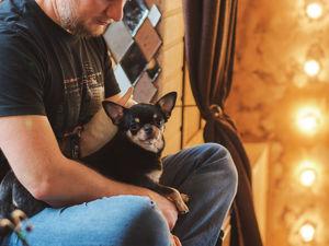 Любовь к животным-как вдохновение. Ярмарка Мастеров - ручная работа, handmade.