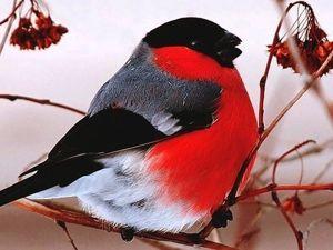 Процесс рождения новой птички. Ярмарка Мастеров - ручная работа, handmade.