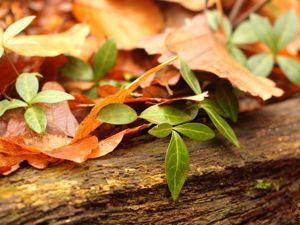 Осень в лесу. Ярмарка Мастеров - ручная работа, handmade.