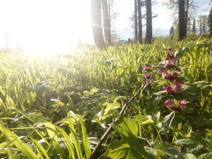 Чудесен лес в предлетье. Ярмарка Мастеров - ручная работа, handmade.