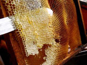 Что такое ЗАБРУС пчелиный? Интересные ФАКТЫ, лечебные свойства!. Ярмарка Мастеров - ручная работа, handmade.