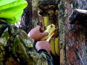 Бортевой мед — что это такое и с чем его едят?. Ярмарка Мастеров - ручная работа, handmade.