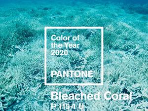 Цвета 2020 года, утвержденные Pantone. Ярмарка Мастеров - ручная работа, handmade.