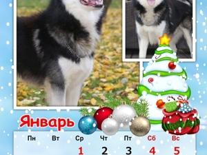 Кошко-собачий календарь Январь. Ярмарка Мастеров - ручная работа, handmade.