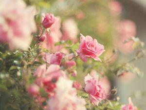 Розовый сад зимой. Ярмарка Мастеров - ручная работа, handmade.