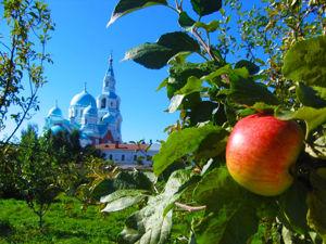Удивительные яблоневые сады Валаамского монастыря. Ярмарка Мастеров - ручная работа, handmade.