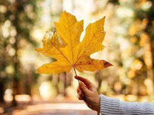 За что можно любить осень?. Ярмарка Мастеров - ручная работа, handmade.