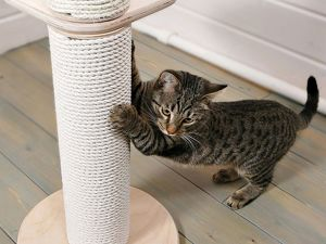 Зачем коту когтеточка?. Ярмарка Мастеров - ручная работа, handmade.