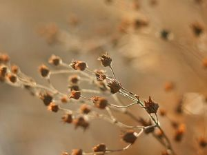 Зимние травы. Ярмарка Мастеров - ручная работа, handmade.