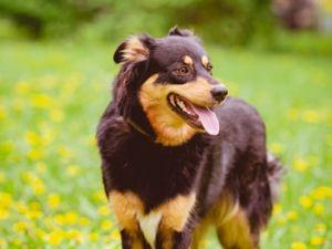 Идеальная собака Динка!. Ярмарка Мастеров - ручная работа, handmade.