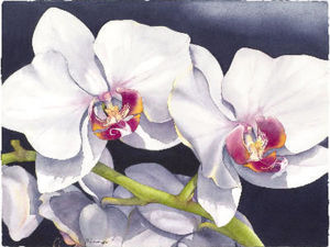 Тропические цветы и птицы Barbara Groenteman. Ярмарка Мастеров - ручная работа, handmade.