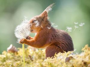 Дико смешные и похожи на нас: названы финалисты конкурса забавных снимков животных Comedy Wildlife Photography Awards. Ярмарка Мастеров - ручная работа, handmade.