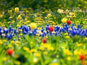 Акция на формы весенних цветов. Ярмарка Мастеров - ручная работа, handmade.