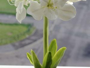 Необычные цветы для Учителя!!!. Ярмарка Мастеров - ручная работа, handmade.