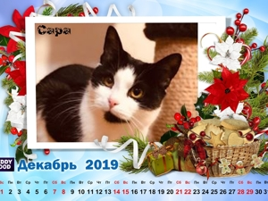 Кошачий календарь Декабрь 19г. Ярмарка Мастеров - ручная работа, handmade.