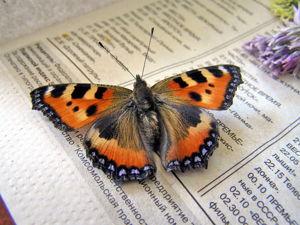 Молд бабочки крапивницы!. Ярмарка Мастеров - ручная работа, handmade.