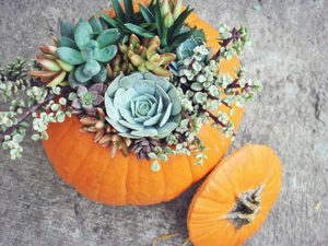 You'll Refuse to Carve Scary Pumpkins Seeing These Gorgeous Ideas with Succulents. Livemaster - handmade