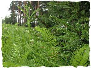 """""""Чай в лесу"""" и """"Ведьмины прогулки"""": лес во флаконе!. Ярмарка Мастеров - ручная работа, handmade."""