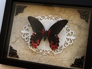 Бабочка парусник Румянцева. Ярмарка Мастеров - ручная работа, handmade.