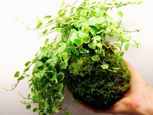 Tutorial  «Forest Moss in Interior» : Phytodesign at Home, in Office. Livemaster - handmade