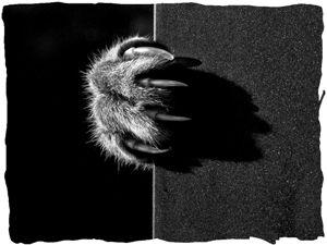 Ведьмин Кот: тотемный Зверь. Ярмарка Мастеров - ручная работа, handmade.