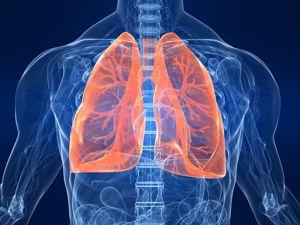 Как укрепить дыхательную систему. Ярмарка Мастеров - ручная работа, handmade.