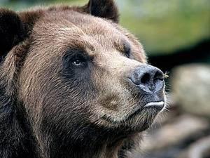 Лепим нос для медведя.. Ярмарка Мастеров - ручная работа, handmade.