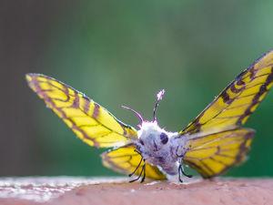 Как я создавала реалистичную бабочку. Ярмарка Мастеров - ручная работа, handmade.