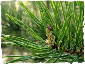 «Чай в лесу»: целительный лес во флаконе!. Ярмарка Мастеров - ручная работа, handmade.