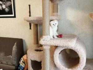 Когтеточки,домики для кошек!. Ярмарка Мастеров - ручная работа, handmade.