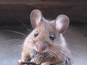 Мышки в искусстве народов мира или самый милый Новый год. Ярмарка Мастеров - ручная работа, handmade.