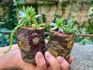 Создаем природный декор: растения в спилах. Ярмарка Мастеров - ручная работа, handmade.
