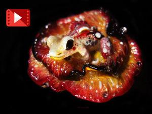 Видеообзор нашей брошки-лягушки. Ярмарка Мастеров - ручная работа, handmade.