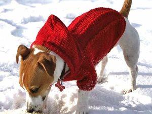 Вяжем свитер для собаки. Ярмарка Мастеров - ручная работа, handmade.