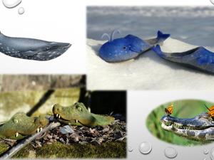Киты и крокодилы. Видео-курс по валянию тапок-шлёпок. Ярмарка Мастеров - ручная работа, handmade.