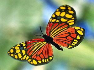 Как нарисовать бабочек за 15 минут?. Ярмарка Мастеров - ручная работа, handmade.