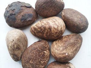 Необработанные орехи тагуа! Огромные!)). Ярмарка Мастеров - ручная работа, handmade.