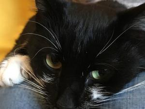 Миролюбивый и спокойный котик Митяй. Ищет дом!!! Москва. Ярмарка Мастеров - ручная работа, handmade.