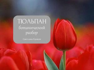 Из чего же сделаны наши тюльпаны... Ботанический разбор цветка. Ярмарка Мастеров - ручная работа, handmade.