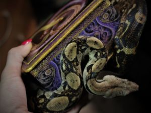 Видео — Как проходила фотосессия шкатулок с живой змеей. Ярмарка Мастеров - ручная работа, handmade.