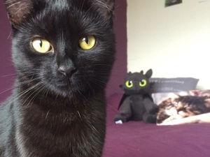 Мир глазами кошачьих. Ярмарка Мастеров - ручная работа, handmade.