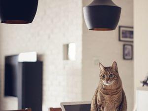 Как бороться с кошачьими шалостями?. Ярмарка Мастеров - ручная работа, handmade.