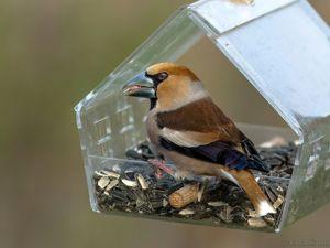 Чем кормить птиц летом в кормушке?. Ярмарка Мастеров - ручная работа, handmade.