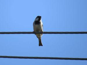 Почему птицы не погибают, когда сидят на линиях электропередач?. Ярмарка Мастеров - ручная работа, handmade.