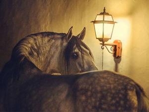 Мощь и грация, сила и нежность. Лошади на фотографиях Екатерины Друзь. Ярмарка Мастеров - ручная работа, handmade.