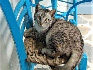 Кошки на стульях (подборка фотографий). Ярмарка Мастеров - ручная работа, handmade.